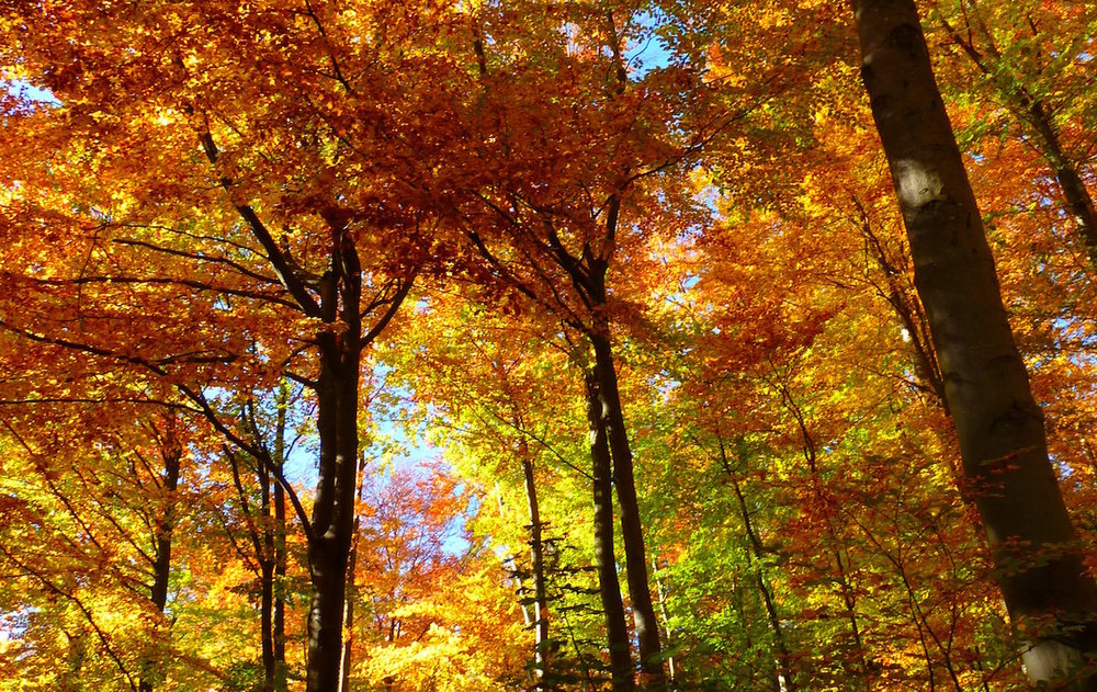 forest-63275.jpg