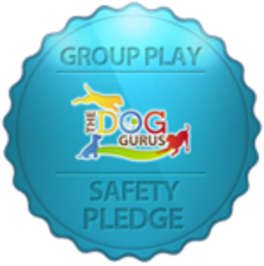 Group Play Safety Pledge Dog Gurus.png