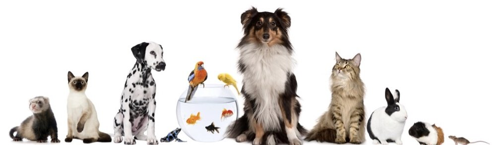 Why should you only use a professional pet sitter? - As the pet-care industry grows, it is important that pet owners are more prudent than ever when selecting a pet sitter.As more and more online pet-sitter directories become available, it is important to research any site you are considering using to find a pet sitter and pay special attention to the service providers listed.Consider these questions:Does the site have requirements for listing?Are the service providers listed professional businesses or does the site accept listings from kids, college students and other non-professional sitters?Does the site differentiate between professional and non-professional sitters?Sited from Pet Sitters International (PSI)