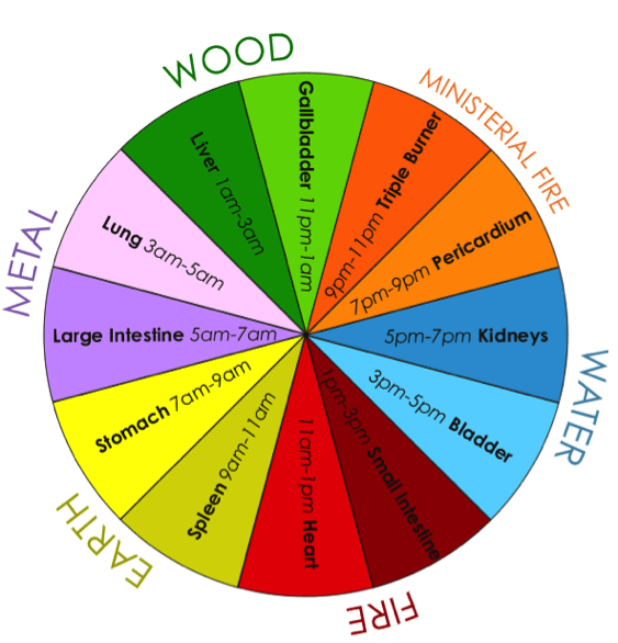 A 24-hour Organ Qi Cycle:  clickable version here      from   www.lightcenterlove.com