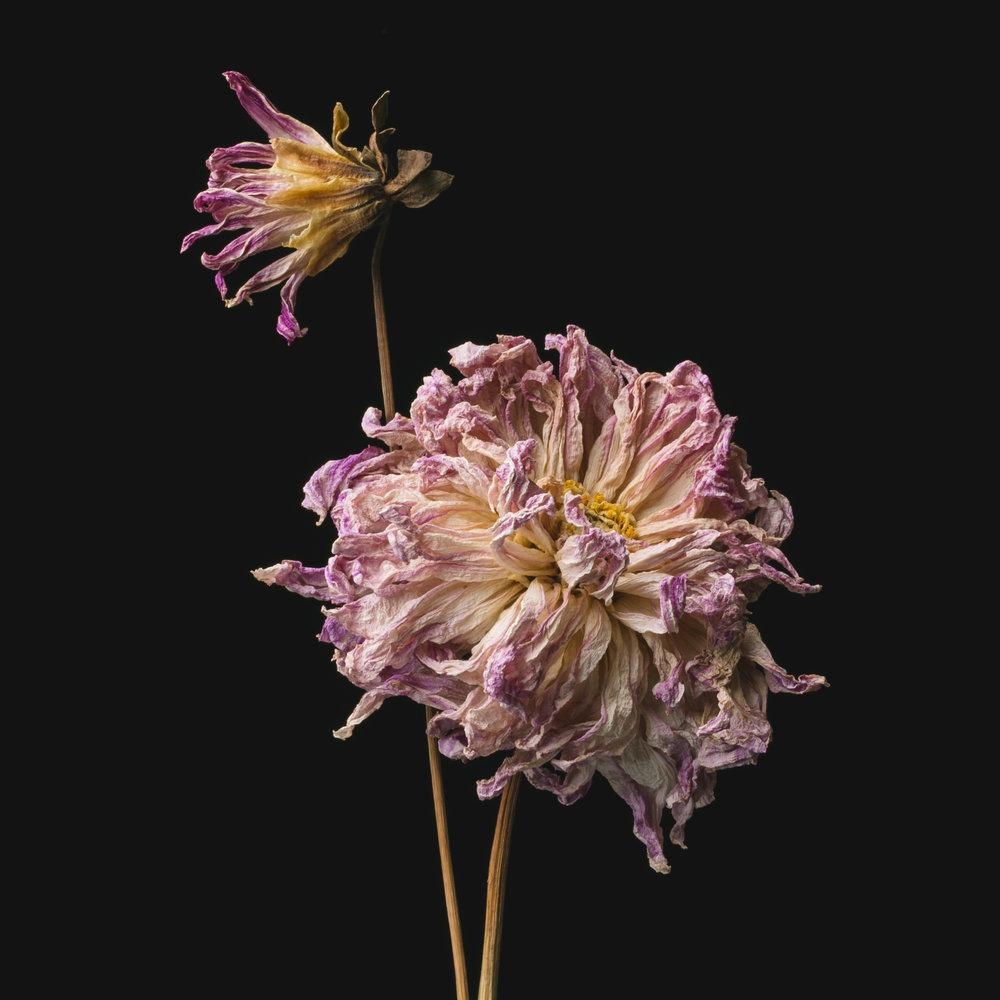 Flowers-018.JPG