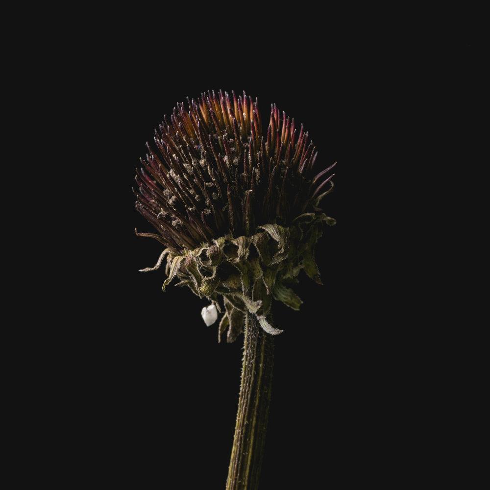 Flowers-034.JPG