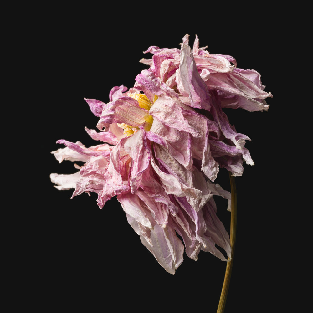 Flowers-042.JPG