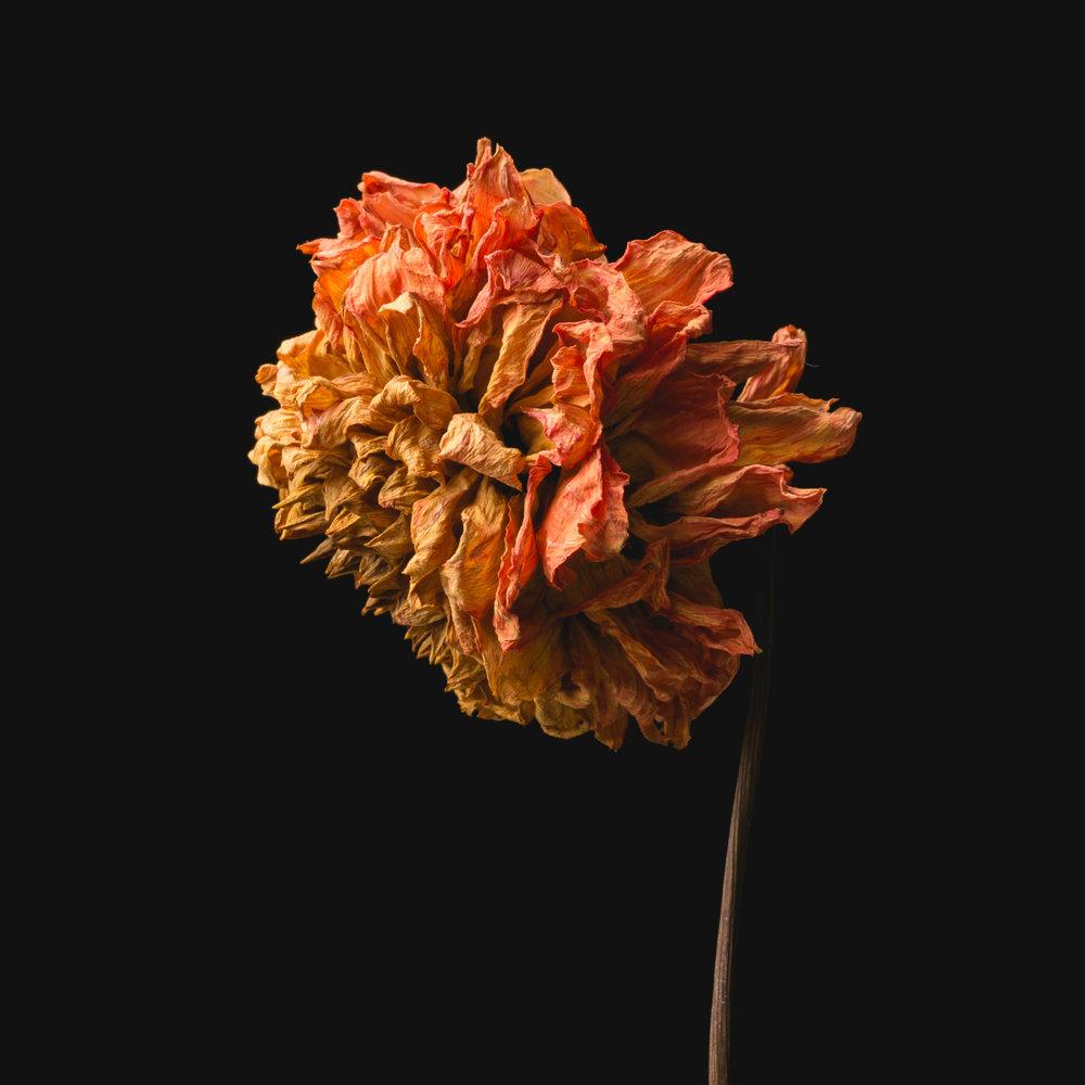 Flowers-049.JPG