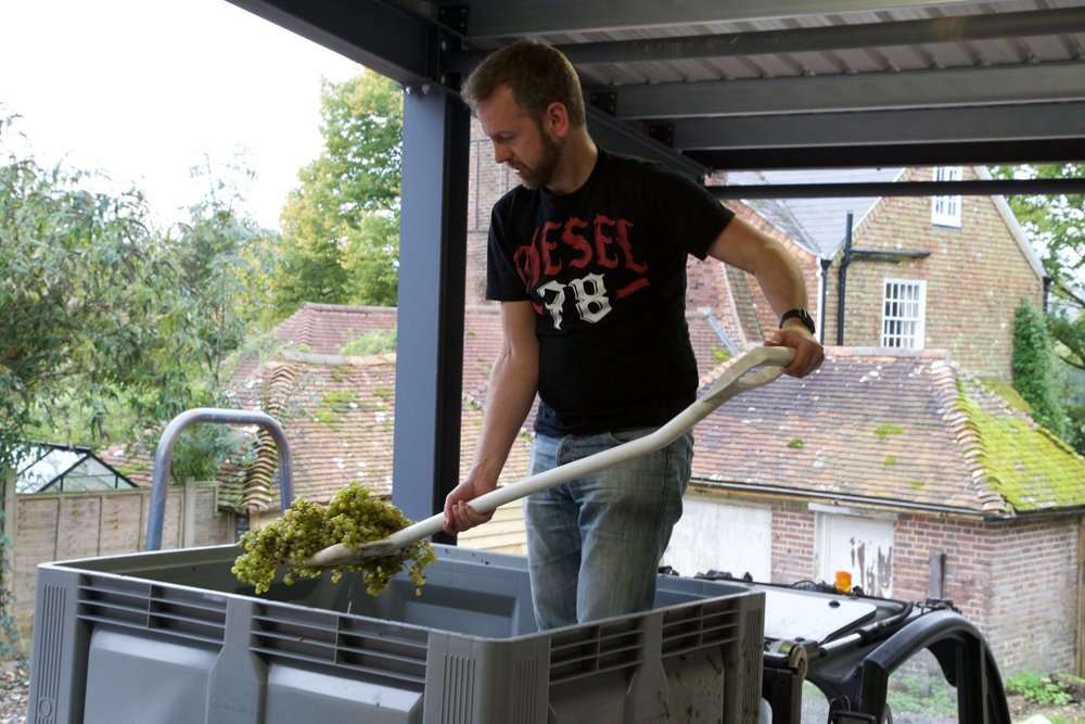 Chris loading grapes into the press