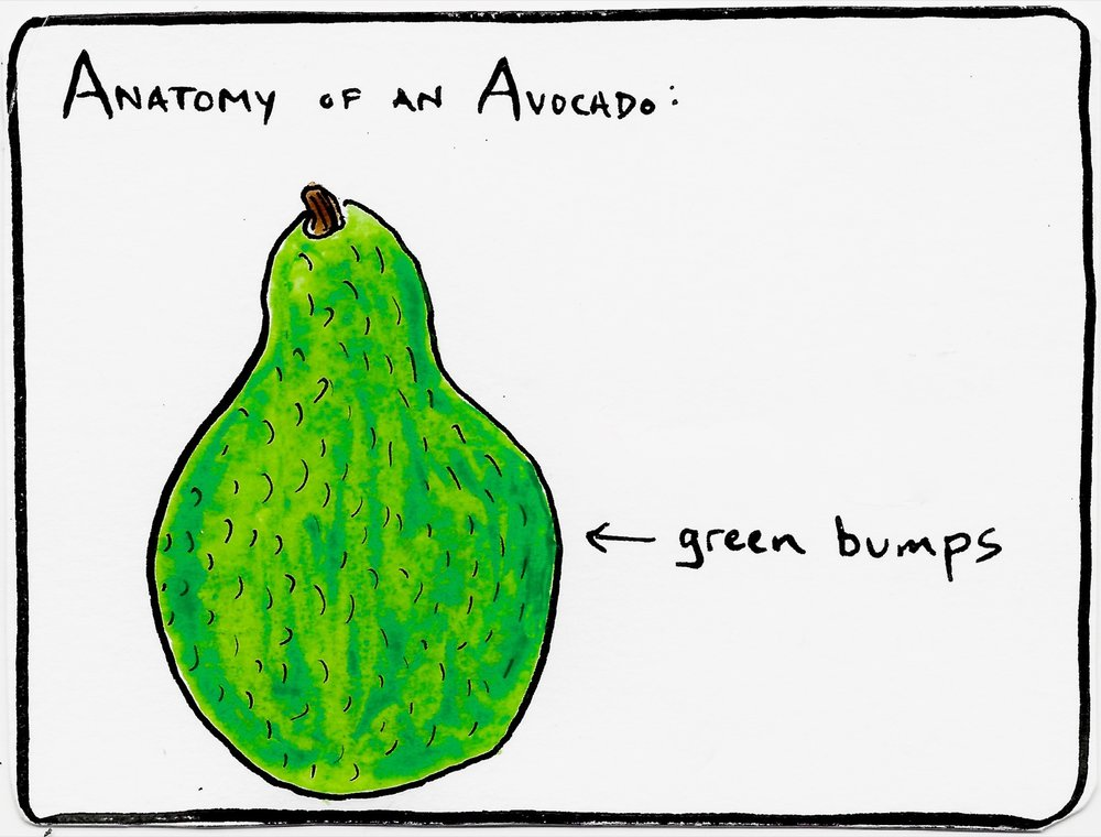 Anatomy of an Avocado
