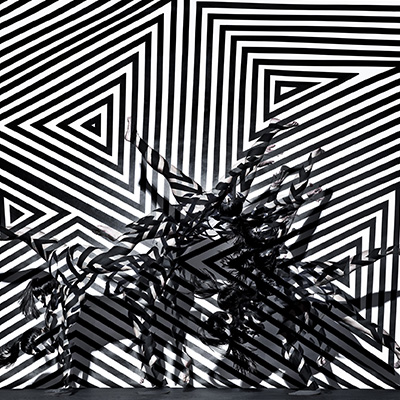 20/2 Zebra