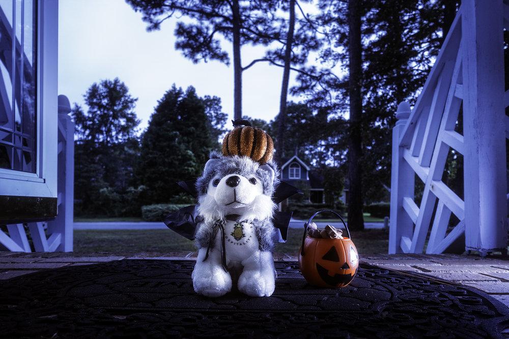 Dash Halloween.jpg