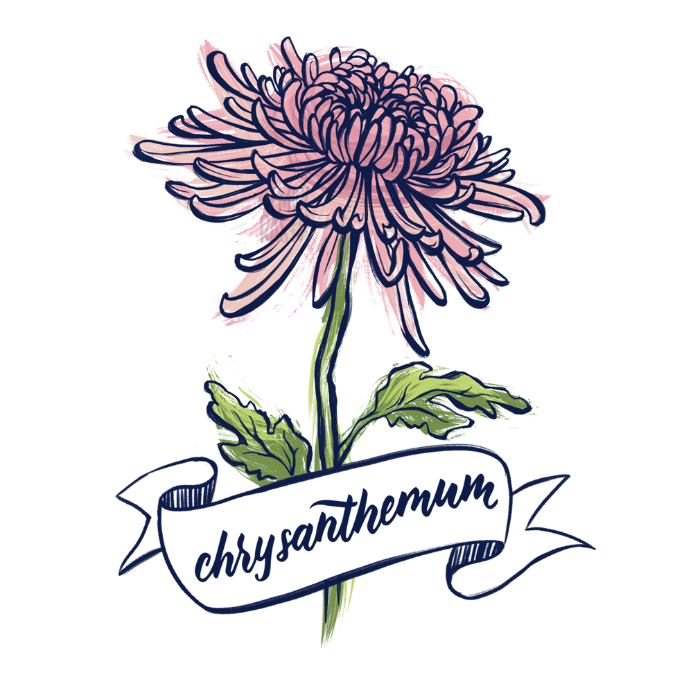 Chrysanthemum illustration with hand lettering