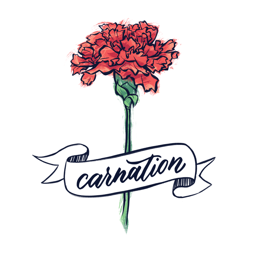 Carnation flower illustration with hand lettering