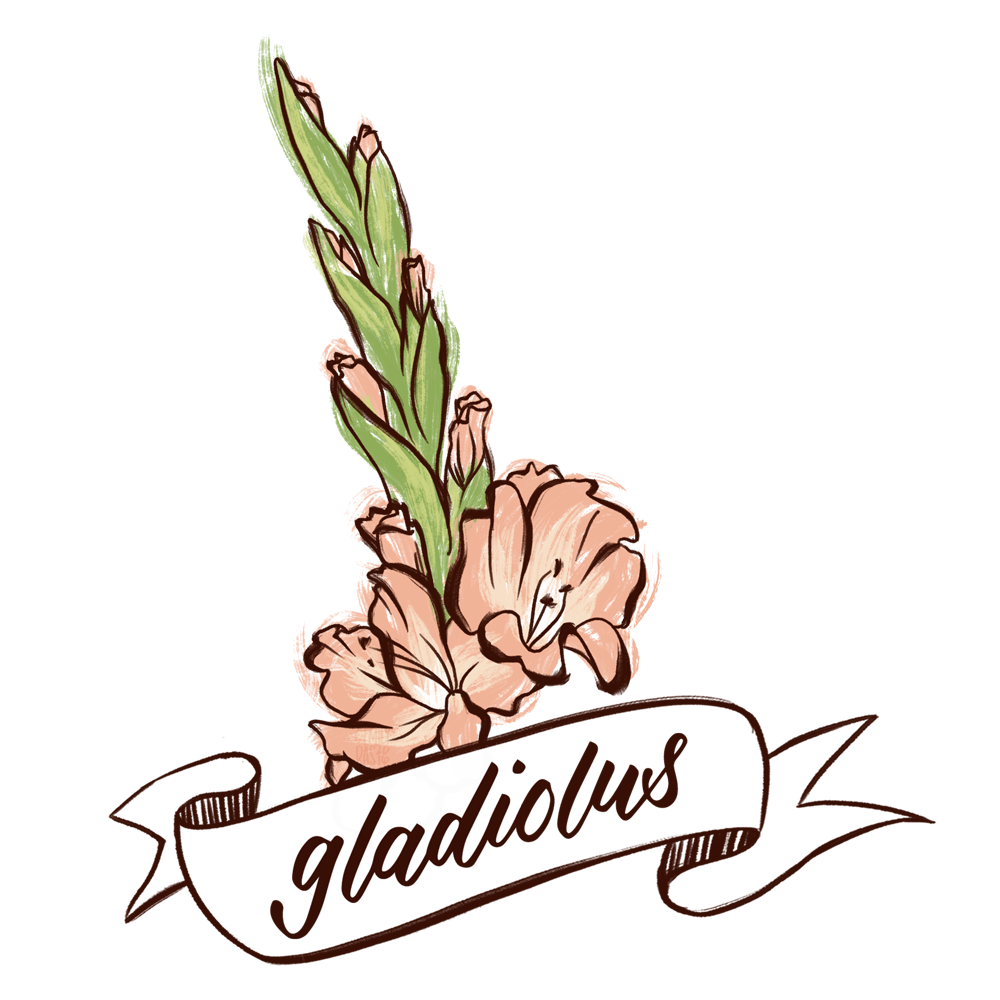 Gladiolus flower illustration with hand lettering