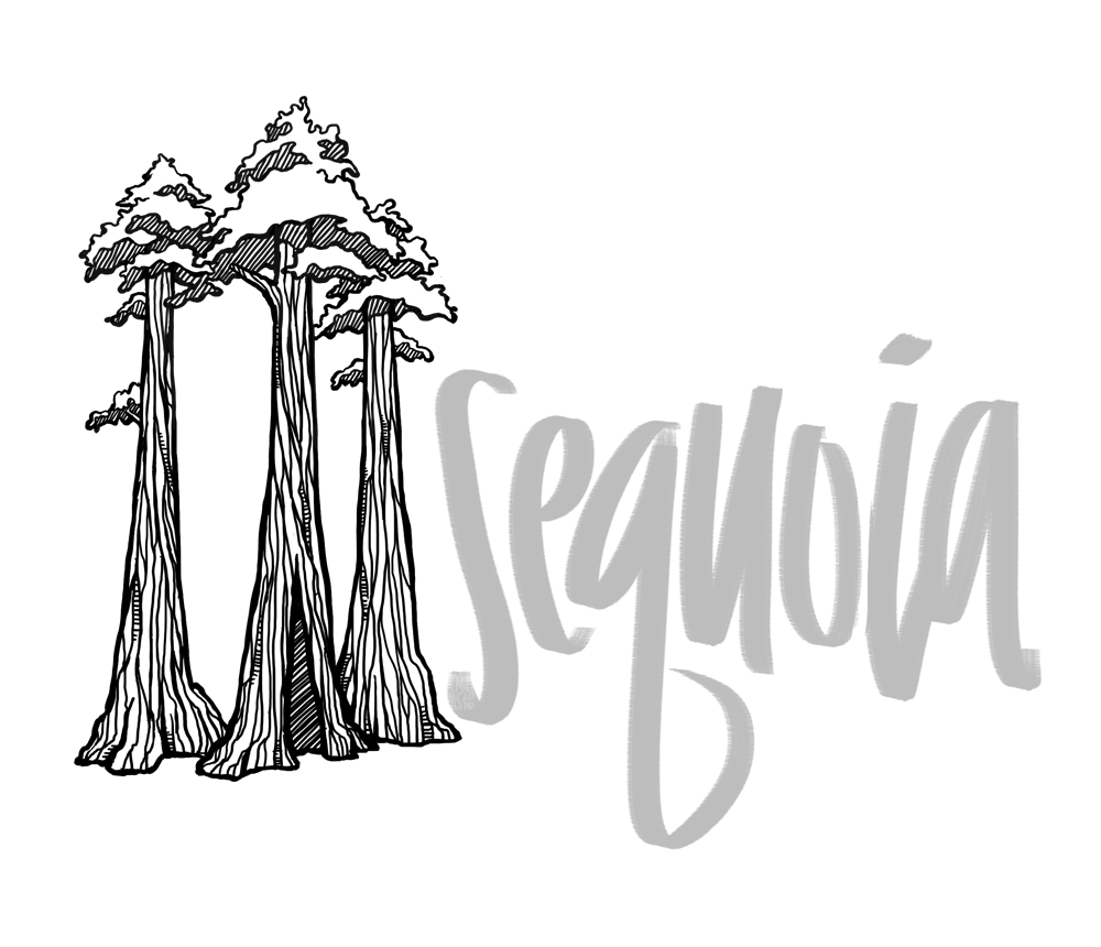 Sequoia tree illustration with hand lettering