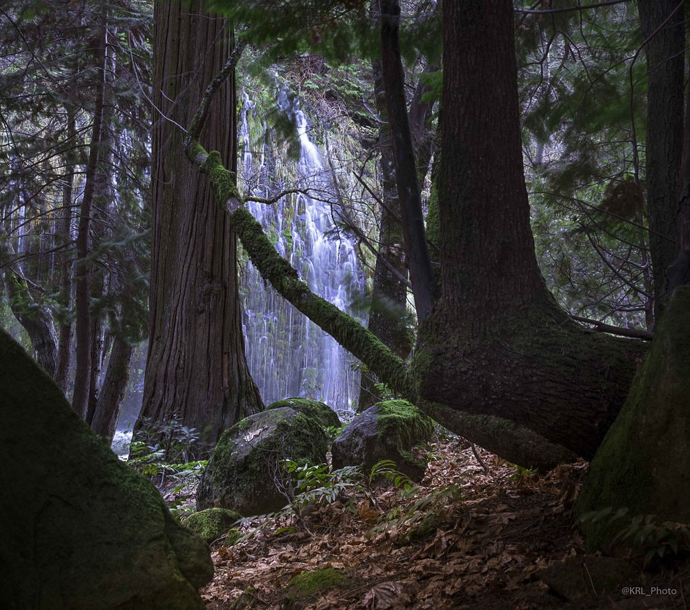 Mossbrae Falls Forest.jpg