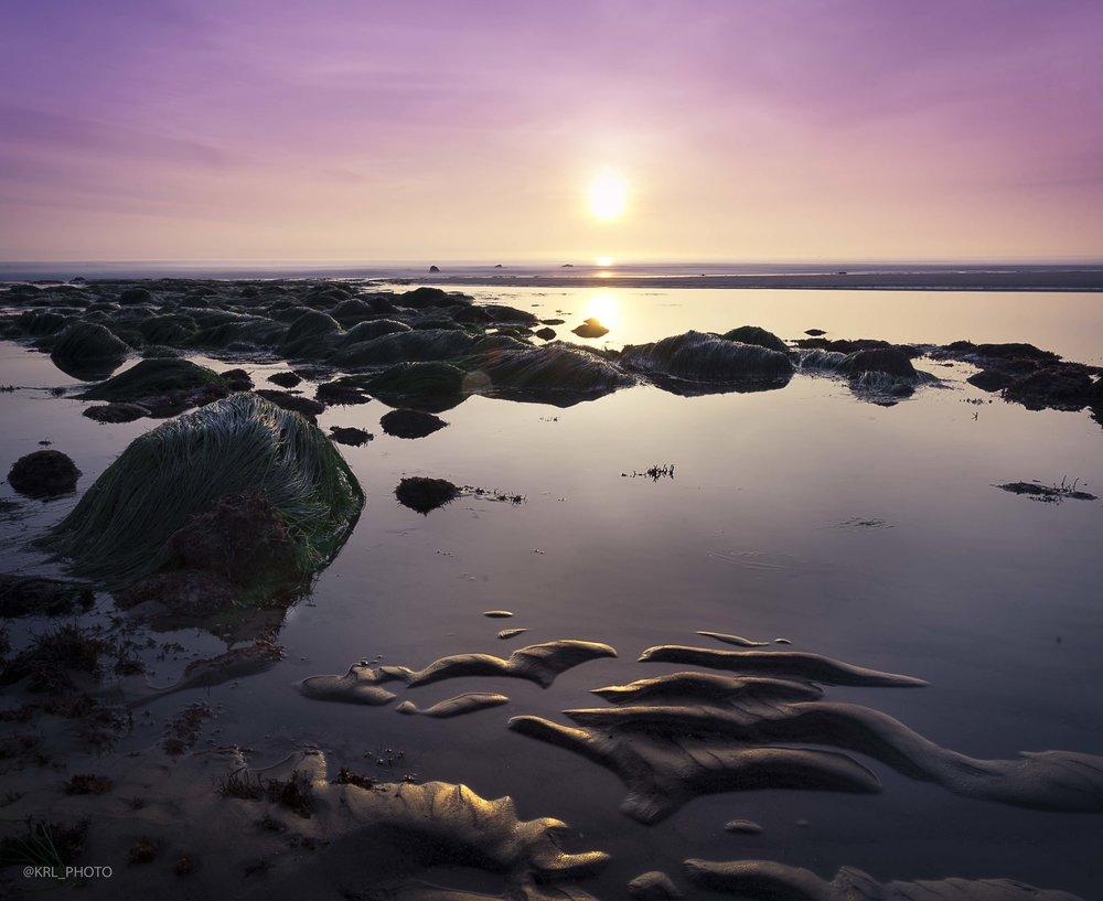Purple Paradise.jpg