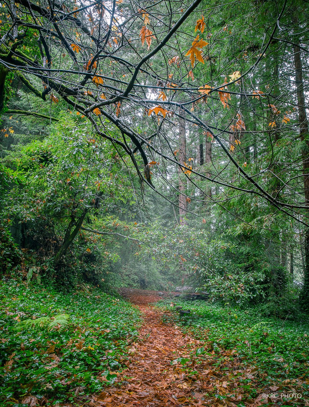Foggy Autumn Path.jpg