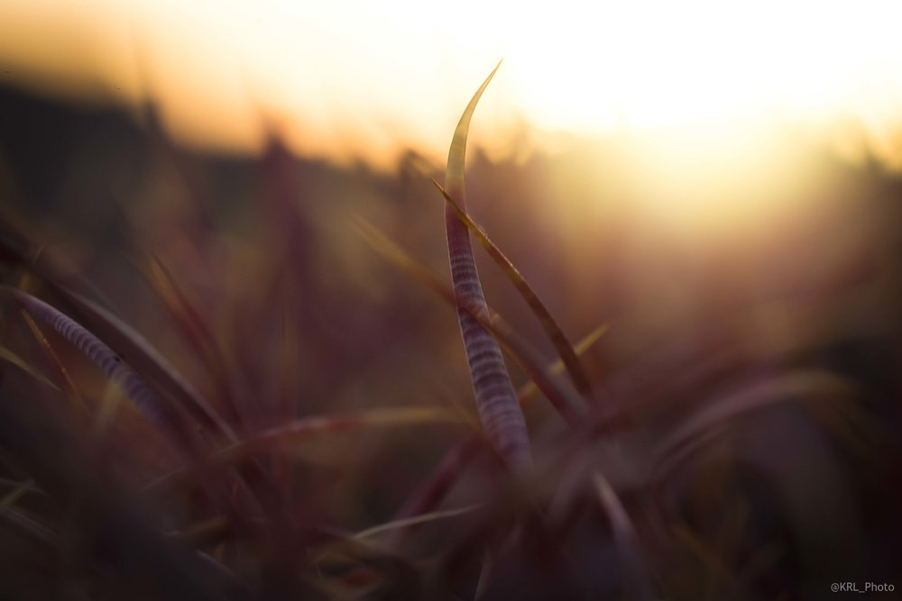 Cactus sunset.jpg