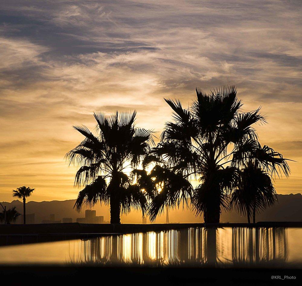 Palm Sticks.jpg