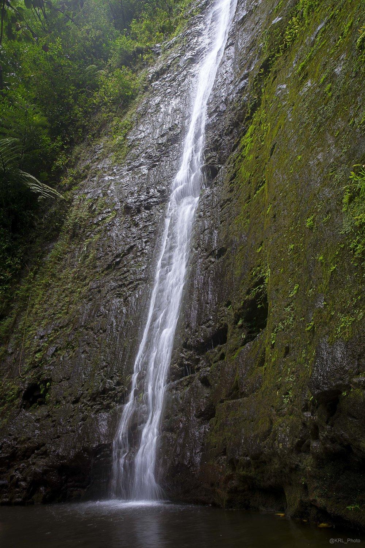 Manoa Falls - Jurasic.jpg