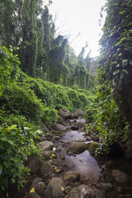Manoa Falls Hike 2.jpg