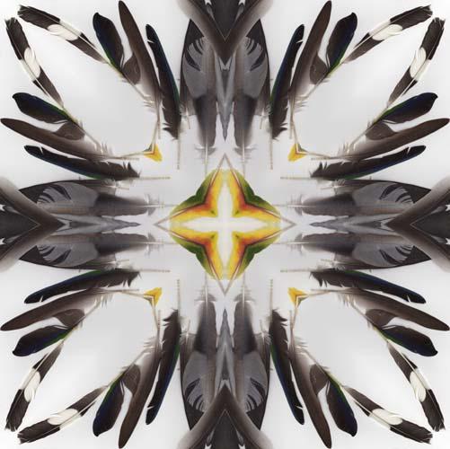 21016_feathers18_BW_SR.jpg