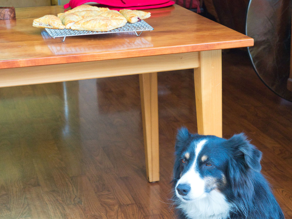Riley won't leave the table while there are goodies up there...