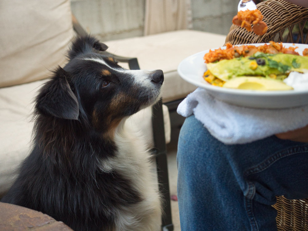 Riley would really like a chicken enchilada!
