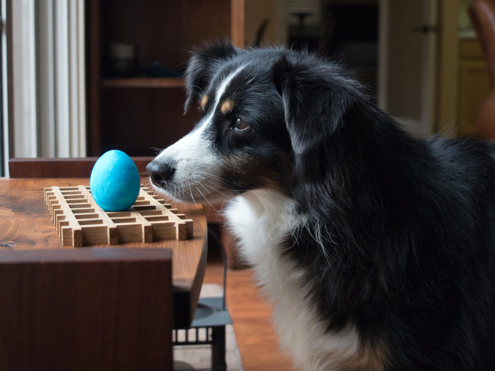 Riley ponders whether the chicken that laid this egg was also blue.