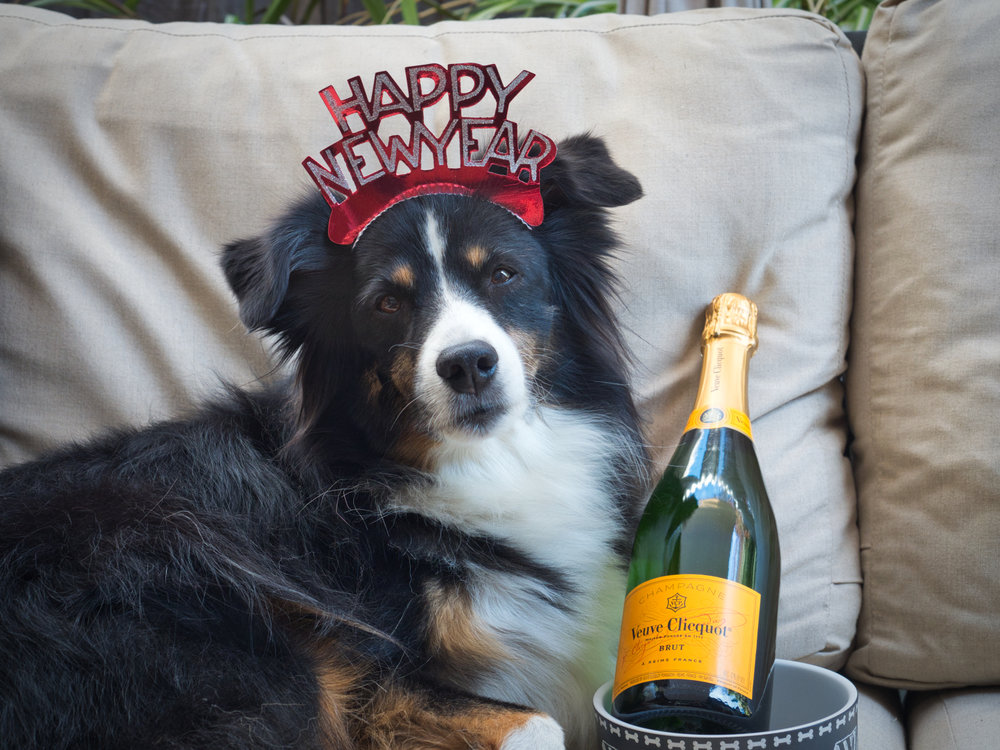 """Riley Says """"Happy New Year… now, get this thing off my head""""!"""