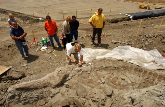Mammoth Fossil Found on Construction Site | F.E. Moran Special Hazard Systems