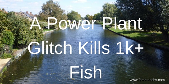 A power plant glitch kills over one thousand fish