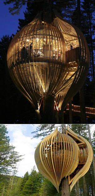 Tree House Architecture | The Moran Group