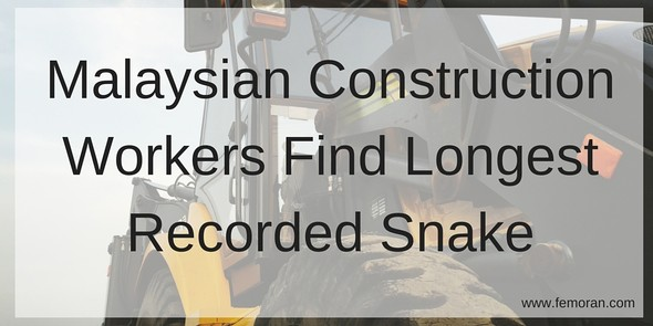 Malaysian Construction Crew Finds World's Longest Snake