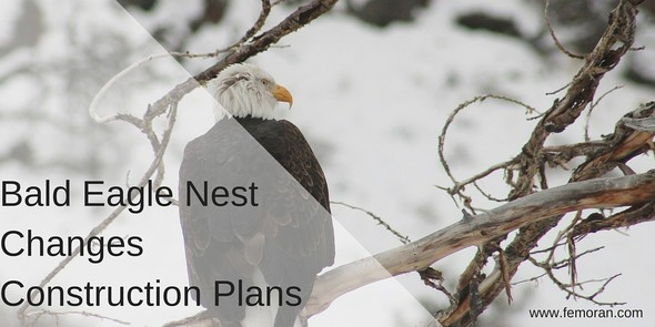Bald Eagle Nest, construction