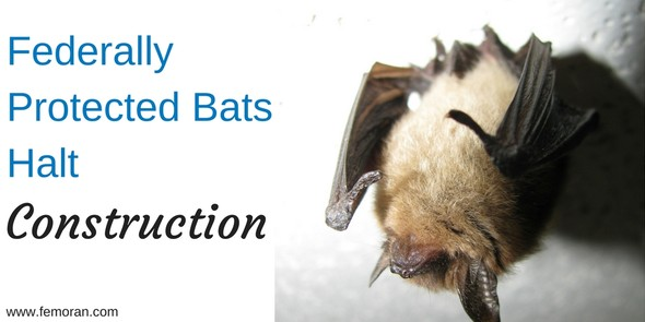 Federally Protected Bats Halt Construction