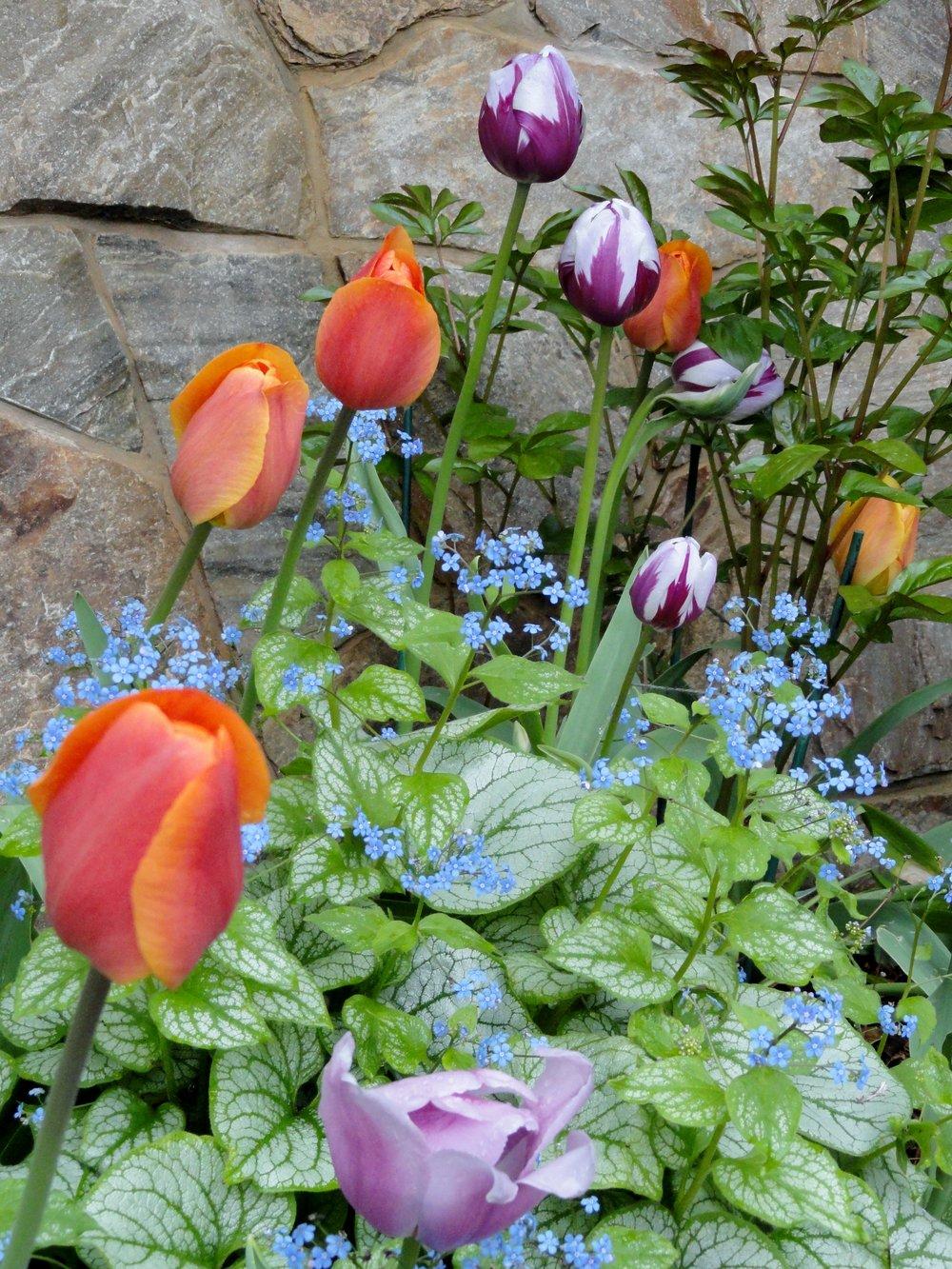 springbulbs-10-hero-verdura.jpg