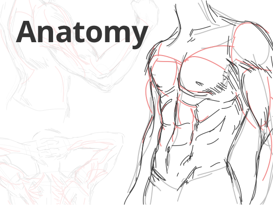 how-to-draw-anatomy.png