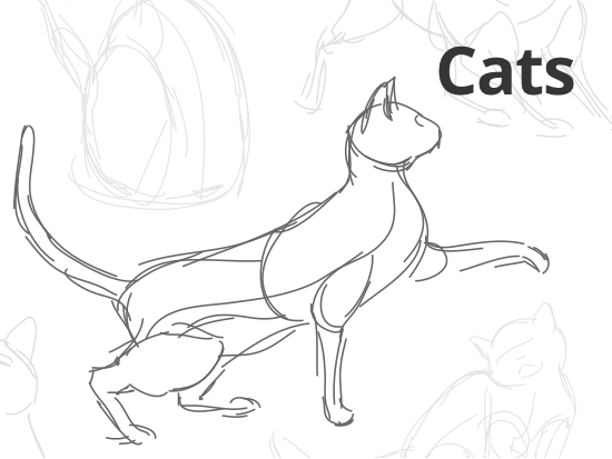 how-to-sketch-cats.png