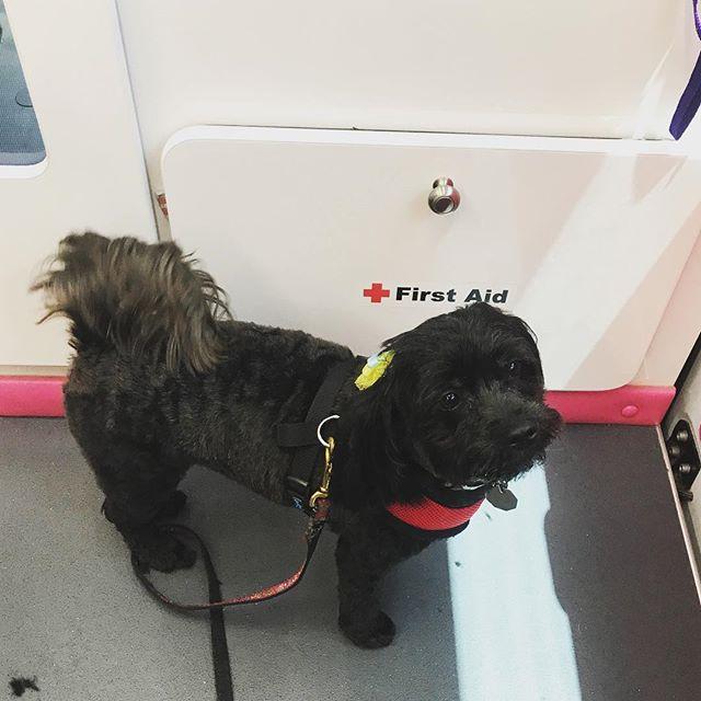 Chloe #dogs #grooming #mobilegroomer #mobilegrooming #pets #petsoninstagram #yorkiepoo #couturemobilegroomingspa #fortlauderdalebeach #broward