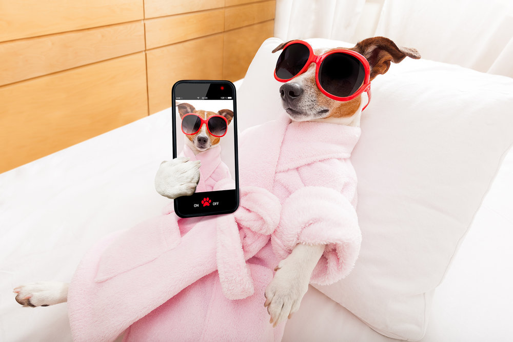 We got a lot to bark about - Booking has never been easier. Schedule your appointment online, at anytime, and from anywhere! It's simple, secure, and convenient.
