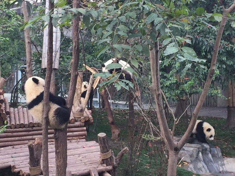 panda base.jpg