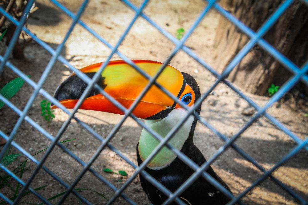 Parc Zoològic de Barcelona1.jpg