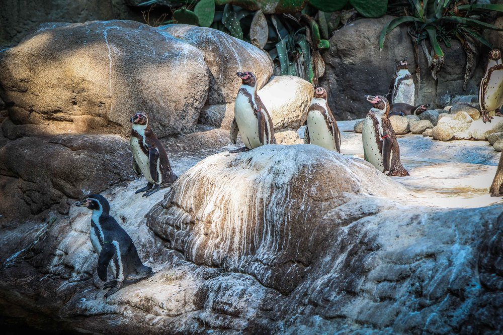 Parc Zoològic de Barcelona4.jpg