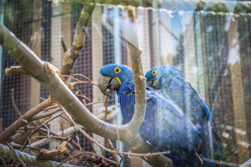 Parc Zoològic de Barcelona9.jpg