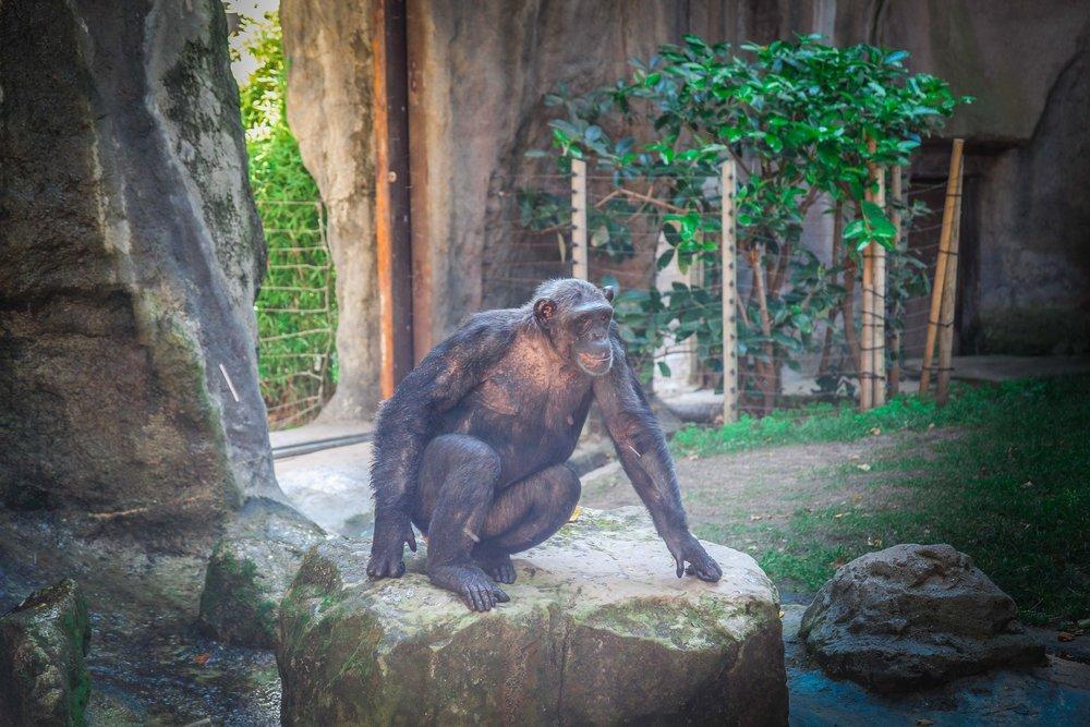 Parc Zoològic de Barcelona10.jpg