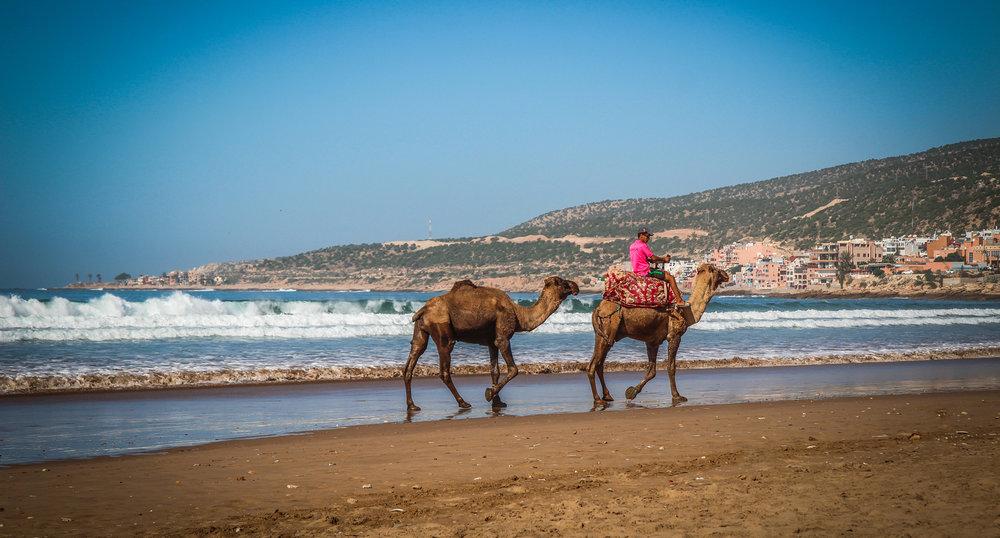 Taghazout - Marokko - Reizen met kinderen - Kameel.jpg
