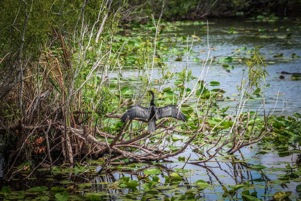 everglades_reizen_met_kinderen_Anhinga_Trail_Florida_Royal Palm Visitor Center-32.jpg