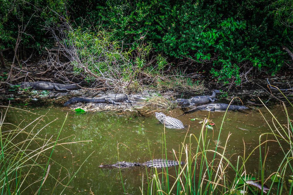everglades_reizen_met_kinderen_Shark_Valley_Florida_Fietsen-12.jpg