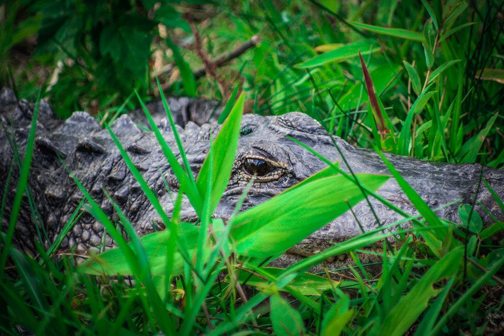 everglades_reizen_met_kinderen_Shark_Valley_Florida_Fietsen-15.jpg