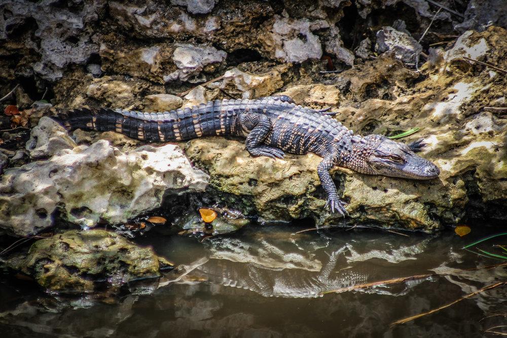everglades_reizen_met_kinderen_Shark_Valley_Florida_Fietsen-21.jpg