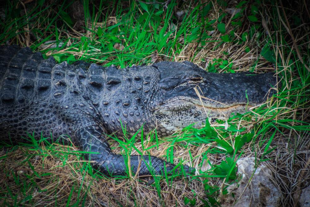 everglades_reizen_met_kinderen_Shark_Valley_Florida_Fietsen-33.jpg